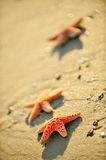 Starfishes on wet sand Royalty Free Stock Photos
