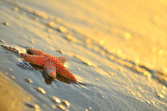 Starfishes on wet sand Stock Photo