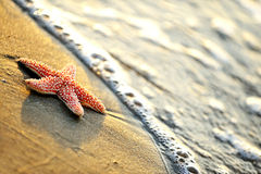 Starfishes on wet sand Stock Photography