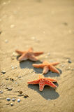 Starfishes on wet sand Stock Photos