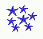 Starfishes on white background Stock Photo
