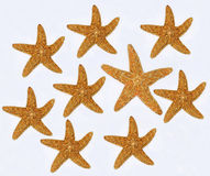 Starfishes on white background Royalty Free Stock Images