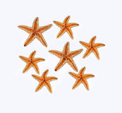 Starfishes on white background Royalty Free Stock Photography