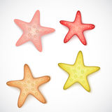 Starfishes on white background Stock Images