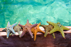 Starfishes on wooden boat Stock Image