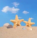 Starfishs и seashells на песке пляжа Стоковое Изображение