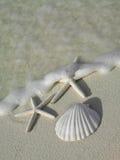 starfishs 2 пляжа стоковые изображения