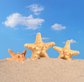 Starfishs on a beach sand Royalty Free Stock Photography