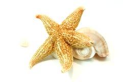 Starfishs and seashells Royalty Free Stock Photography