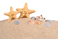 Starfishs and seashells in a beach sand on a white Royalty Free Stock Image