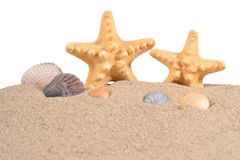 Starfishs and seashells in a beach sand on a white Stock Photography