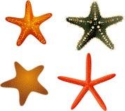 Starfishsammlung bunt auf einem weißen Hintergrund Lizenzfreie Stockbilder