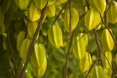 Starfruit: Карамбола стоковая фотография