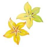 Starfruit or carambola Stock Photo