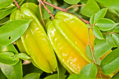 Starfruit on Tree Royalty Free Stock Images