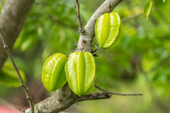 Starfruit Stock Photography