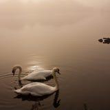 Stargate Teich im Herbst Lizenzfreie Stockfotografie