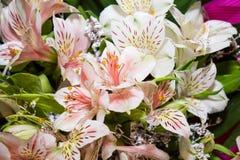 Stargazer Lilies. Bouquet of white Stargazer Lilies Stock Photos