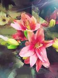 Stargazer Lilies Painting Stock Photos