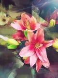 Stargazer Lilies Painting Stock Photos