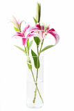 Stargazer Lilies in Vase. Beautiful pink stargazer lilies in vase on white background Royalty Free Stock Photography