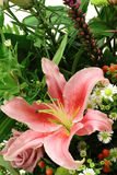 Stargazer Lily. Closeup on a pink lily or stargazer in a bouquet of flowers sent as a gift for a special occasion Stock Photography