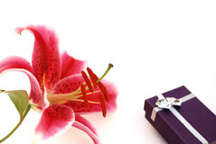 Stargazer Lily and gift box. For valentine Stock Photos