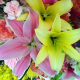 Blooming Stargazer Lilies. A bouquet of fresh stargazers in full bloom stock image