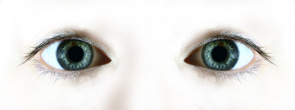 Staring. Eyes staring out from a white background Stock Images