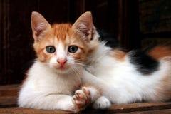 Staring. Little kitten taken in Fez's souk Stock Photography