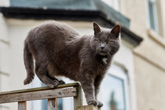 Staring cat on the fence Royalty Free Stock Images
