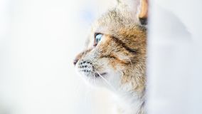 Staring cat profile. The cat`s profile stares out into the distance stock images