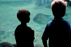 Staring Contest. Two little boys silhoetted against a fish tank with a big fish staring back at them Royalty Free Stock Photo
