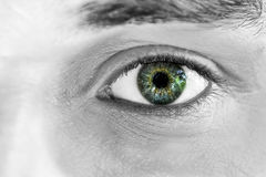 Staring Green 1 Royalty Free Stock Photo