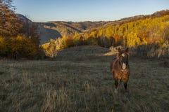 Staring horse Stock Image