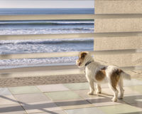 Staring out to sea Stock Images