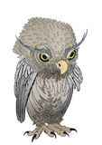 Staring owl chick cartoon. A cute owl chick cartoon based on a hand drawing Stock Photo