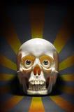 Staring Skull Stock Images