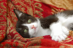 Staring into space. Cute black and white kitten just staring into space Royalty Free Stock Photography