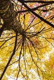 Staring up to the sky from a trees perspective in the fall. So many colors of fall and enjoying the view from all angels royalty free stock image