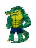 stark alligator Arkivbild