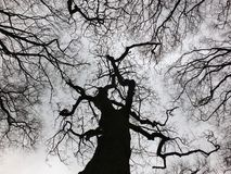 Stark black winter tree and forest canopy with twisted branches Stock Photo