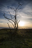 Stark bush silhouette against stunning sunset sky Stock Images