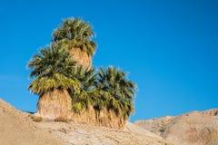 Five Palms Stock Photo