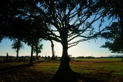 Silhouette of a large mature tree in a park stock photo