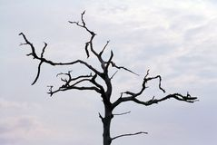 Stark dead tree against gray sky Royalty Free Stock Photo