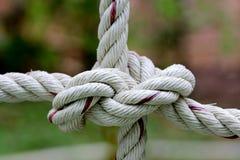 Stark fnurra som binds av ett rep   Royaltyfria Foton
