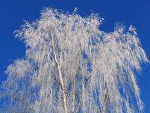 stark frost Royaltyfri Foto