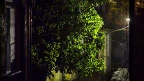 Stark hällregn i gatan på natten lager videofilmer