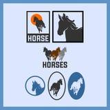 Stark häst som körs som, s-vind Arkivbilder